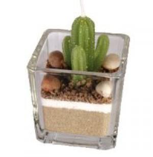 Kaktusz mécses